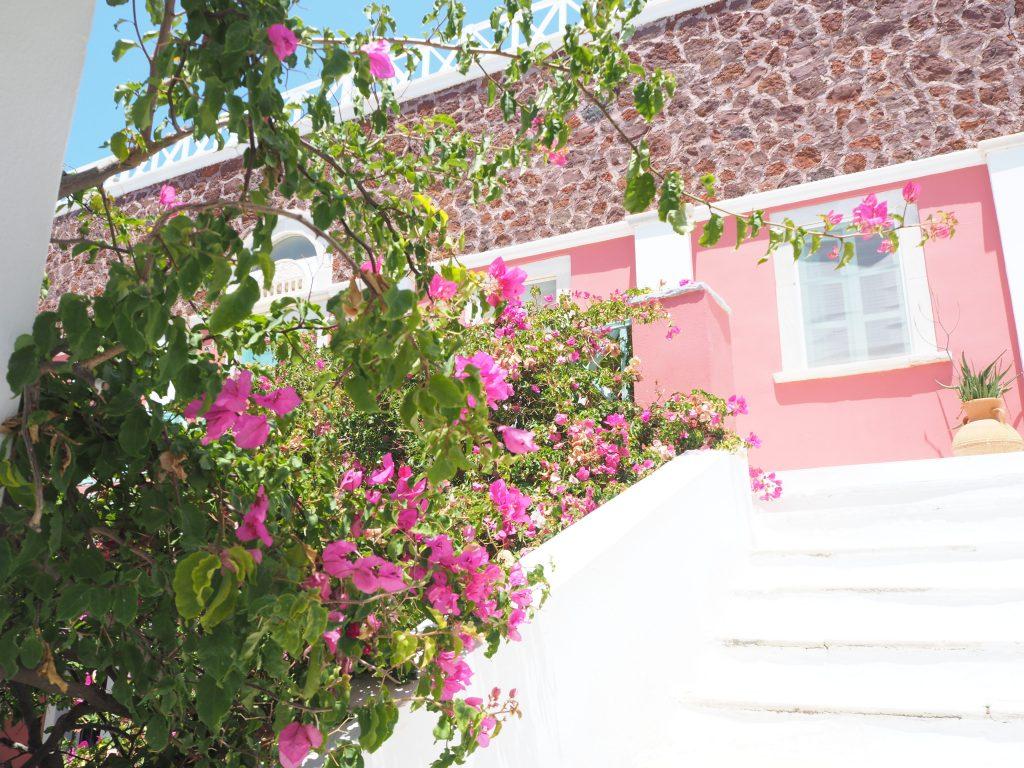 サントリーニ島のお花