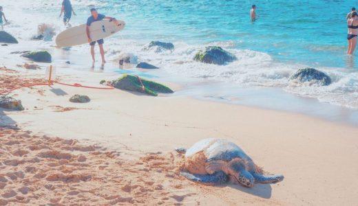 ウミガメに会えるラニアケアビーチ