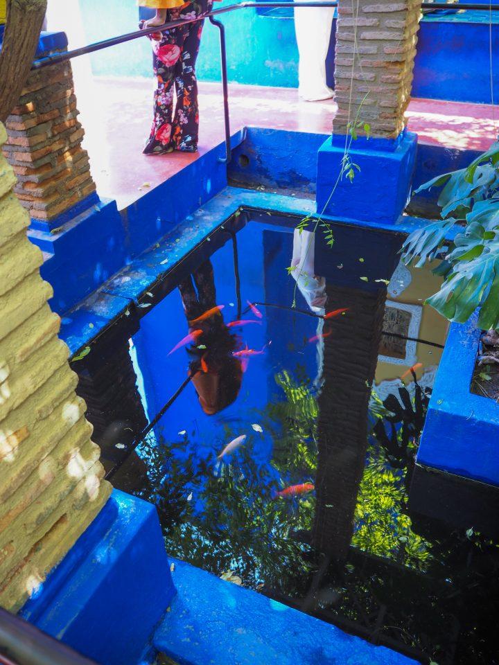 The Jardin Majorelleの鯉