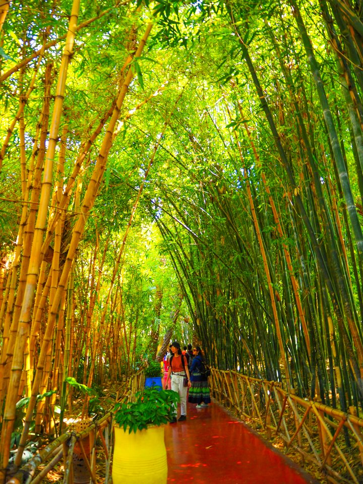 The Jardin Majorelleの竹林